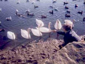 Swan Pond Press